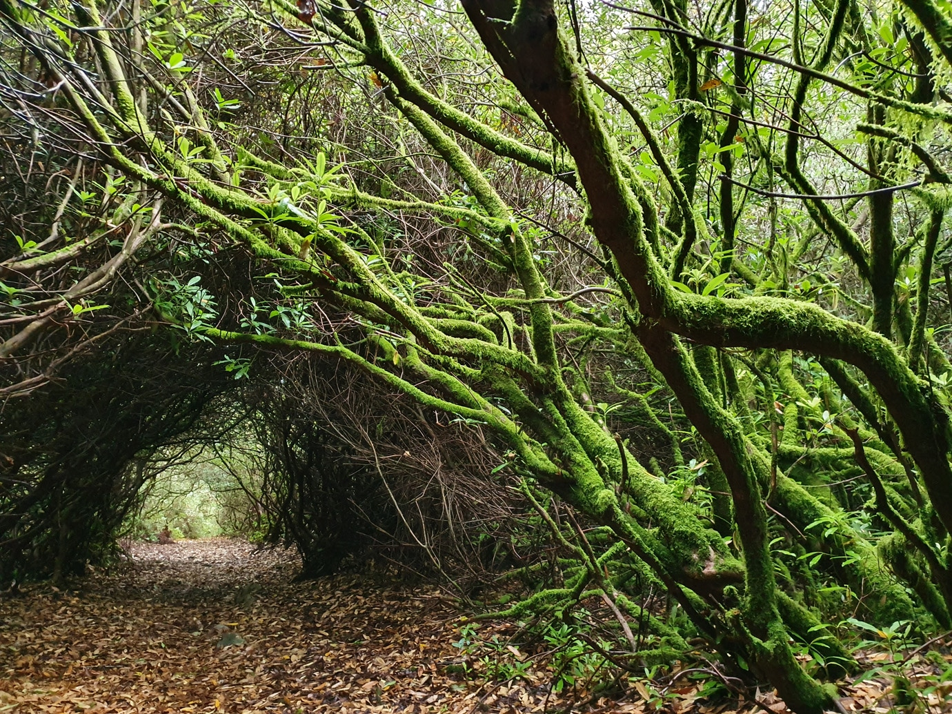 2nde pro d'orientation (jardin, nature, espaces verts) pour qui et pourquoi ?